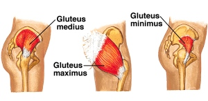Gluteal-Muscle-Group